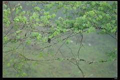 DP1U6634 (c0466art) Tags: light beautiful grass fog creek canon landscape scenery atmosphere mysterious land 1dx c0466art