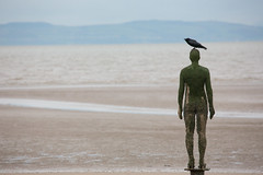 Another Place (SReed99342) Tags: england sculpture bird art beach installation crow antonygormley anotherplace crosbybeach