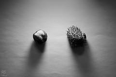 Dry Nature II. (Gbor Felfldi) Tags: blackandwhite bw art nature monochrome artwork fineart dry artsy photoart artphoto