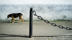 It would be better if you fed me dear photographer (kirilko) Tags: dog wall 35mm moody fuji shadows streetphotography ukraine chain kyiv podil bluesy finepixx100 fujifinepixx100
