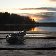 toad (dovlindphoto) Tags: trees sunset sky lake reflection water landscape sundown pentax sweden jetty frog toad cluds ml dovlind dovlindphoto