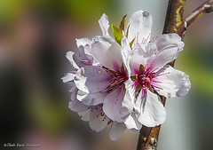 Primavera (claudio.vancini) Tags: primavera fiore ramo fiorito