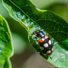 De todo un poco... (De mi jardin) (Barbieri2) Tags: naturaleza insectos macro argentina buenosaires tigre nikond5100 barbieri2