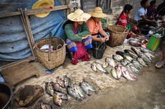 Fish Sellers, Nampan Market, Inle Lake, Myanmar (Nicholas Olesen Photography) Tags: travel people lake fish tourism horizontal outside for nikon asia day commerce basket market sale 5 burma hats myanmar inle vendor southeast selling nampan d90