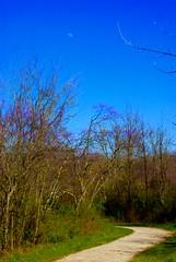 On a clear day (LaLa83) Tags: blue ohio sky nature outdoors spring path sony marcy april alpha 2016 a230 slaterun pickawaycounty ruralohio slaterunmetropark ohiofoothills hikeohio adventureohio