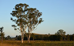 McPhersons Hill (dustaway) Tags: autumn trees landscape hill australia nsw australianlandscape lateafternoon northernrivers australiantrees eucalyptustereticornis forestredgum oaklandroad richmondvalley richmondriverfloodplains mcphersonshill