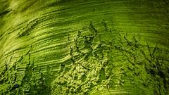 green energy (Ralph Pascher) Tags: wood tree green deutschland europa hessen jahreszeit natur grn orte wald baum frhling eppertshausen