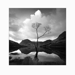 Matter of time (Frans van Hoogstraten) Tags: england sky blackandwhite mountain lake reflection tree art nature monochrome clouds landscape lakedistrict surreal cumbria serene buttermere vulnerable