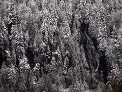 Bridal Veil Falls (Dru!) Tags: christmas trees winter snow canada forest waterfall bc snowy britishcolumbia cascades chilliwack rosedale cascademountains cascaderange cheamrange cheamlake popkum