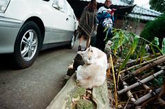 000093860025 (WayChen_C) Tags: film cat canon tokyo kodak ae1  saitama kawagoe  saitamaken  portra400  koedo  kawagoeshi