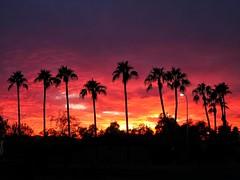 Palms at sunset. (isaacullah) Tags: