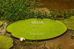 NO_Manaus0421 (Visit Brasil) Tags: travel brazil tourism horizontal brasil amazon rainforest natureza vitriargia manaus norte amazonas detalhe ecoturismo externa semgente diurna riosolimes visitbrasil