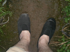 Plimsolls on holiday - More photos (eurimcoplimsoll) Tags: wet shoes pumps toe mud sneakers canvas gym capped muddy elastic plimsolls plimsoles