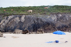 . ([ chang ]) Tags: sea summer cow spain sand rocks mare estate playa es sole mucca spiaggia llanes vaca sabbia mucche roccie beachumbrella ombrellone principadodeasturias playadeborizo wwwriccardoromanocom