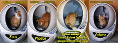 Ginger Kitties Four using Litter Robot Open Air (youtube.com/utahactor) Tags: red orange cats yellow cat mackerel robot open air tabby watch like kittens follow litter phoebe zeus gato gata spotted hd athena share videos striped facebook helios subscribe viral youtube friendsofzeusandphoebe