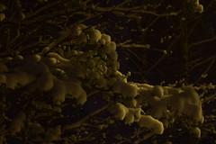 DSC_1569 (ART.VMT) Tags: christmas xmas winter snow cold tree pine evening soft latvia late riga babite