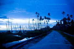 Blue hour (Dorota Polaczek Henuati Expeditions) Tags: ocean beach landscapes seascapes palm bluehour