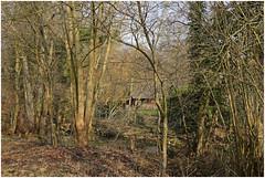 göhl 158 (beauty of all things) Tags: creek belgium bach belgien geul hergenrath göhl lagueule