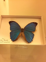 Butterfly (quimby) Tags: art museum butterfly gallery potteries