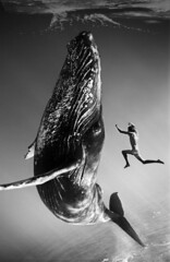 La baleine et le plongeur (JSEBOUVI : thanks for 1.9 million views !) Tags: sea sky mer man animal collage digital photoshop noiretblanc marin illusion effect homme baleine effet jsebouvi