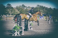 HITS 2016 3 (Photography & Website Design) Tags: horse competition hits jumpers ocala 2016
