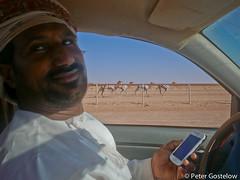 Camel racing (Peter Gostelow) Tags: cycling desert racing oman camels bedu