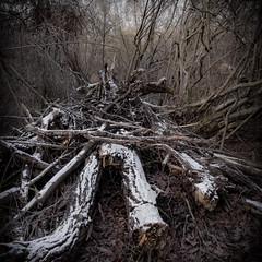 L'arbre mort (Clydomatic) Tags: arbre fort arbremort
