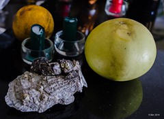 Still life with shells and grapefruit (nousku) Tags: food shells art fruit florida grapefruit fooddrink naturemorte