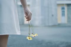 120216 (@Cazt1811) Tags: morning white flower closeup 35mm photography nikon dress expressive d5100