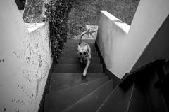 Meine Hunde (pabloanm) Tags: dog perro hunde smrgsbord unlimitedphotos