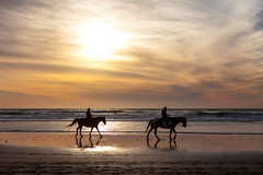 Fort Funston Beach-8043 ( / Jiayin Ma) Tags: horses horse silhouette ride silhouettes horseback