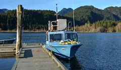 Boat Dock at Pitt Lake Marina ( Peterson Photogr@phy  Happy Valentines Day!) Tags: lake canada water docks boats pier britishcolumbia mooring mapleridge pittlake boatdock pittriver pittpoulder nikond5200 pittlakemarina nikonafs18140mmf3556edvr