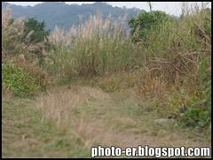 photos by Minolta MC Rokkor PF 58mm f1.4 (photo.er) Tags: minolta olympus m43 minoltamcrokkorpf58mmf14 olympusepl3