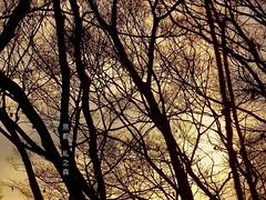 森葉子 画像2