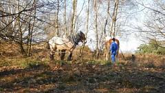 Workhorses (Nelis Zevensloot) Tags: horse cheval heath pferd veluwezoom heide workhorse paard zandverstuiving werkpaard rosendael velp rozendaal bruyre sanddrift trekpaard chevaldetrait rozendaalseveld zugpferd sandverwehung