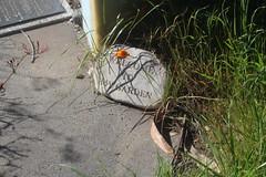 pescadero cemetaries (5) (kenr61) Tags: cemetaries headstones graves pescadero