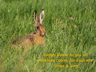 Happy Easter! [Explored 2016-03-27] - Frohe Ostern!