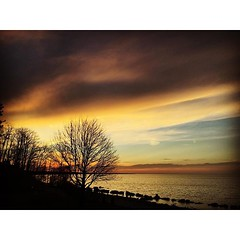 Quite the colors over Lake Erie tonight. (imagesafari) Tags: sunset nature lakeerie thattree naturalohio instagram igersohio clevelandgram igerscleveland ohioexplored clegram