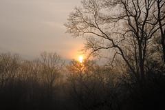 * (vieubab) Tags: nature lumire branches hiver arbres extrieur brouillard chemin fort goldenhour bois brume calme aube feuillage atmosphre branchage luminosit levdujour