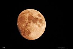 Moon 20/3/2016 22h25 Belgium (Yasmine Hens) Tags: moon europa belgium ngc explore namur hens yasmine mmonlight nikoncoolpixp900 hensyasmine