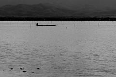 Lago Phayao (Rubén Ugalde) Tags: lake fish thailand lago nikon sigma tailandia fisher pescador phayao d7100