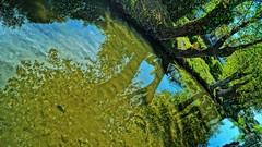 Reflexes (Barbara Bonanno BNNRRB) Tags: trees green water alberi blu natura riflessi reflexes