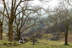 20160402_sheep_lakes_01_LH_web (L Hinton) Tags: england mountain lake mountains nature rock stone countryside district lakedistrict cumbria cave thenorth northwestengland