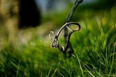 DSC05691 (mortelette.david) Tags: wood grass plante dof bokeh m42 curve flou bois herbe helios bough 442 branche courbe tordu exterieur rameau profondeurdechamp helios44258mmf2