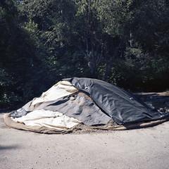 2016-252 (biosfear) Tags: nature humboldt quilt patchwork yinyang