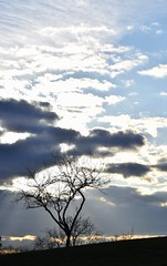 Cloud and tree (marensr) Tags: park blue sky cloud sunlight chicago tree silhouette cloudy horner