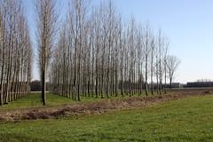 Filari (Ondeia) Tags: sun nature alberi italia day peace geometry sunny natura pace sole abbazia morimondo filari