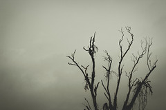 seca (Ismael Alencar) Tags: trees horse nature water kitchen monochrome de landscape waterfall agua natureza flor pb arvores mallet cavalo pretoebranco mata chacara cozinha utensílios maracujá domésticos raízes panelas monocromatico brasilpb interordoparana