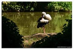 Oasi-S.Alessio-25-04-2016_029 (fdpdesign) Tags: italy macro nature nikon natura animali d800 pavia oasi 2016 salessio nikon105micro
