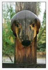 Birch Hill Grave Marker (R. Drozda) Tags: autumn slr film wet grave rain alaska cross 35mmfilm burial carvedwood minoltasrt101 fairbanks gravemarker doghead epson4490photoscanner drozda birchhillcemetery fujicolorsuperizxtra800 rokkor58mmf24lens
